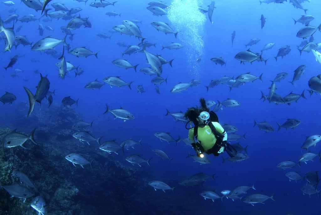 """Arquipélago dos Açores classificado como """"Hope Spot"""" para a conservação dos oceanos"""