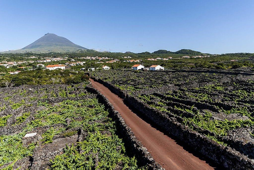 Pico vineyard culture landscape distinguished with international award
