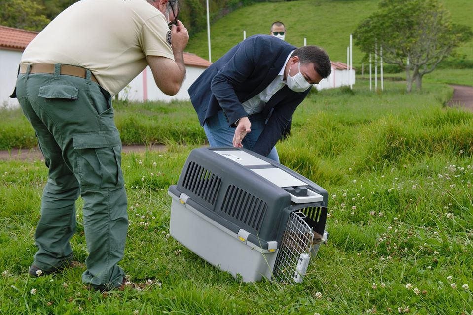 Centros de reabilitação dos Açores já acolheram quase mil aves selvagens